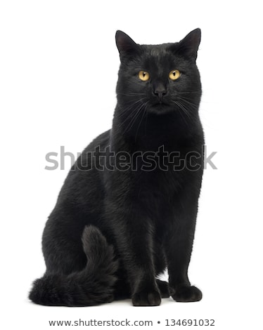 黒猫 孤立した 白 猫 髪 緑 ストックフォト © EwaStudio