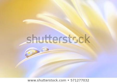 abstract waterdrops closeup background stock photo © levonarakelian