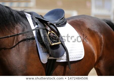 Sitting Brown Horse Stock photo © derocz