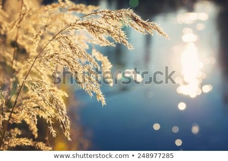 болото · реке · южный · Иллинойс - Сток-фото © ryhor