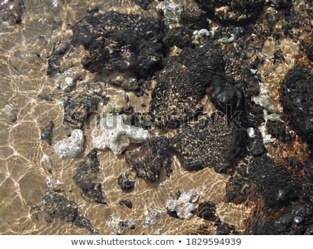 óceán kő medence tengerpart utazás hullámok Stock fotó © lovleah