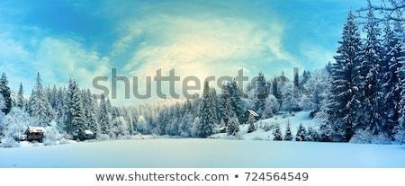 Tél erdő fák felhőtlen kék ég tájkép Stock fotó © Kurhan
