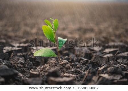 ひびの入った 土地 テクスチャ 地球 フィールド ストックフォト © dinozzaver