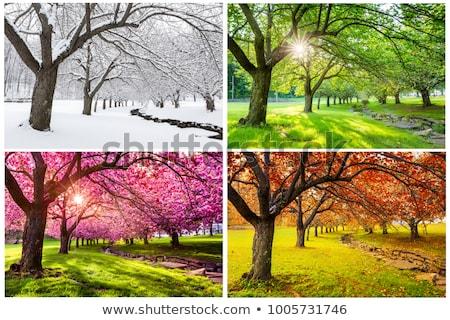 Cztery pory roku drzewo cute ptaków kwiat wiosną Zdjęcia stock © MKucova