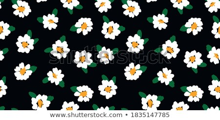 Camomile seamless pattern Stock photo © Hermione