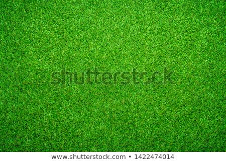 futball · zöld · fű · izolált · futball · sport · nyár - stock fotó © tungphoto