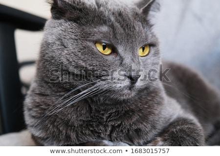 kedi · genç · oturma · yalıtılmış · beyaz · gözler - stok fotoğraf © 39HH39