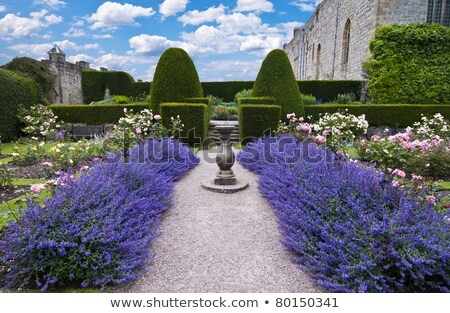 a gravel pathway between formal beds of lavender leading to an old sundial and trimmed hedges beyond Stock photo © Julietphotography