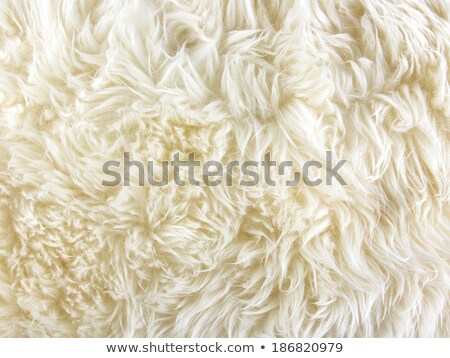 long sheep fur Stock photo © taviphoto
