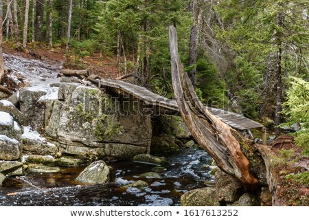 Small Wooden Bridge over a Stream in Forest at winter Stock photo © ankarb