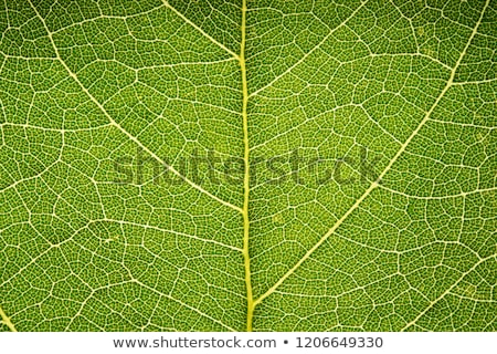 Closeup of a leaf  Stock photo © artistrobd