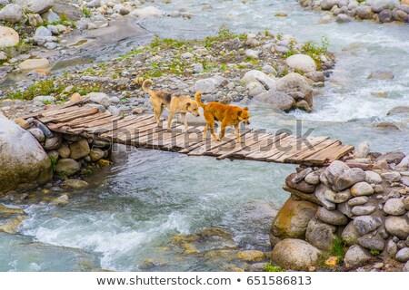 bridge over a lake stock photo © sportactive