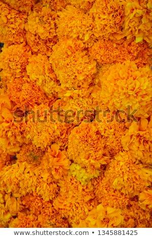 Stock photo: Cempasúchil Flower