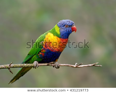 Szivárvány narancs madár zöld utazás portré Stock fotó © dirkr