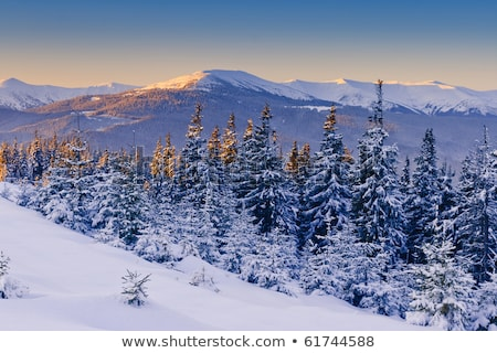 Mroźny rano góry zimą krajobraz piękna Zdjęcia stock © Kotenko