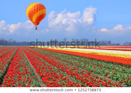 Magnificent field of tulips in Holland. Lisse. Stock photo © lypnyk2