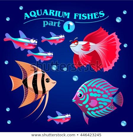 vektor · szett · édesvíz · akvárium · halfajok · illusztráció - stock fotó © natalya_zimina