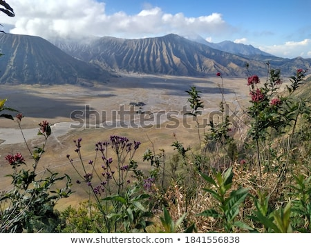 Fire weeds with mountains in background  Stock photo © tab62
