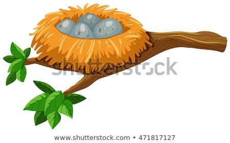 4 卵 鳥の巣 実例 卵 背景 ストックフォト © bluering