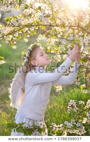 kicsi · fehér · angyal · néz · gyermek · béke - stock fotó © lovleah