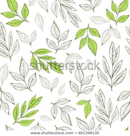 Végtelen minta zöld tea levelek zöld tea fény Stock fotó © blackmoon979