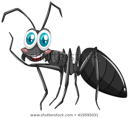 Zwarte mier blij gezicht illustratie gelukkig natuur Stockfoto © bluering