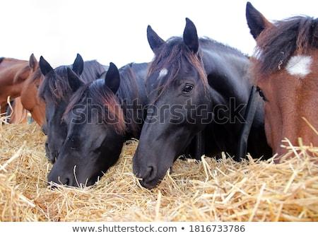 paarden · boerderij · huis · natuur · paard - stockfoto © raywoo