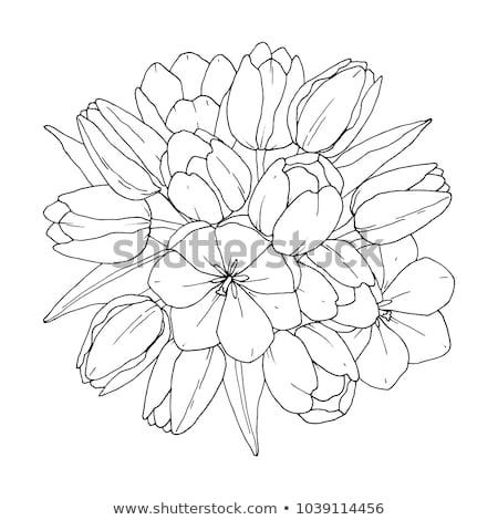 növénytan · szimbólumok · szett · kilenc · vektor · eps8 - stock fotó © freesoulproduction