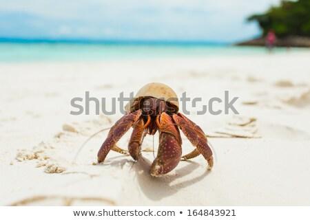 Hayalet yengeç sarı kurban kum plaj Stok fotoğraf © eh-point