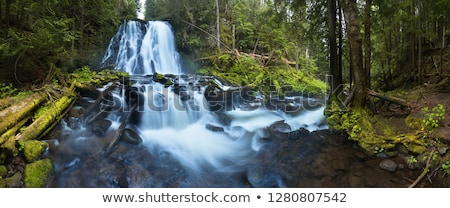 Scene of forest and a stream Stock photo © bluering