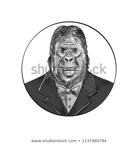 Gorilla Wearing Tuxedo Drawing Stock photo © patrimonio