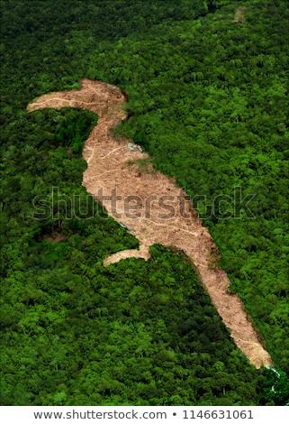 Görmek ormancılık çalışmak Bina doğa manzara Stok fotoğraf © pedrosala
