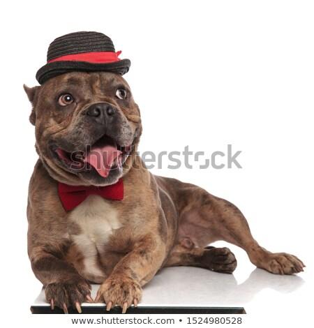 Gentleman amerikaanse hoed beneden Stockfoto © feedough
