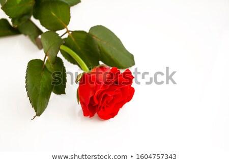 Glücklich Jahrestag Karte Vorlage rote Rosen Illustration Stock foto © colematt