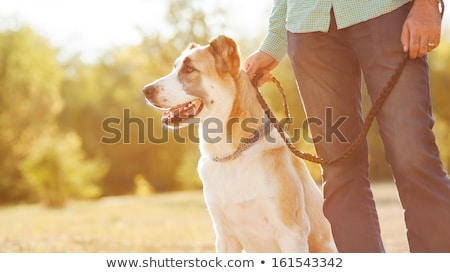 autumn park and guy running with dog on leash stock photo © robuart