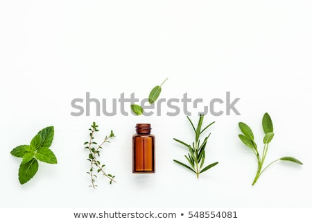 A bottle of sage essential oil with fresh sage twigs Stock photo © madeleine_steinbach