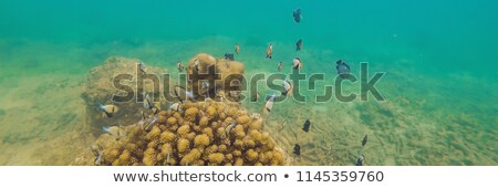 Wonderful and beautiful underwater world with corals and tropical fish BANNER, long format Stock photo © galitskaya