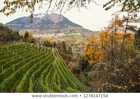 Vineyard, autumn forest and mountains in Trento Stock photo © frimufilms