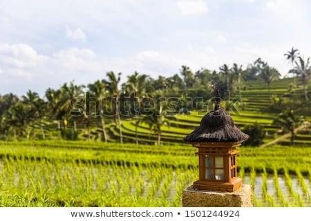 Pequeño altar arroz campos sudeste bali Foto stock © boggy
