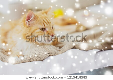 red tabby cat lying on blanket at home over snow Stock photo © dolgachov
