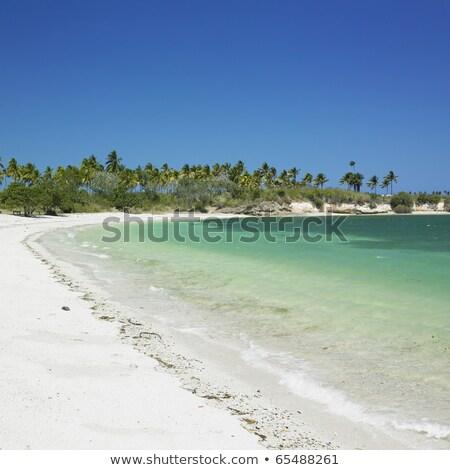 Cuba · árvore · mar · palma · palmeira · plantas - foto stock © phbcz