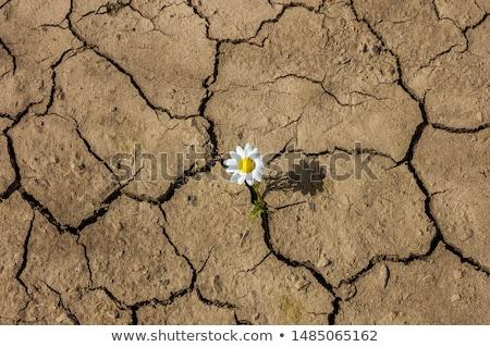 Deserto flores dia fóssil montanha areia Foto stock © craig