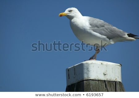 Stock photo: Seagull is watching at something or someone coming.