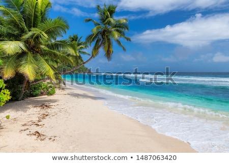 palmeira · caribbean · mar · Barbados · árvore · paisagem - foto stock © phbcz