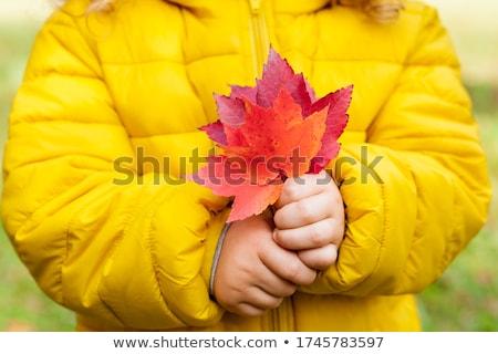 Sonbahar yaprakları el eski ahşap yaprak grup Stok fotoğraf © premiere