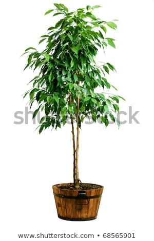 árvore · raízes · folha · beleza · rede · ramo - foto stock © smithore