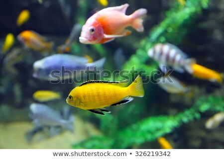 Various fishes in aquarium Stock photo © orson