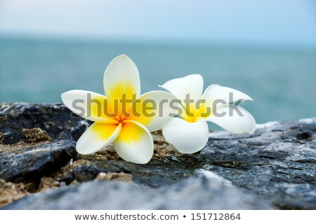 stones with flowers on beach stock photo © ozaiachin