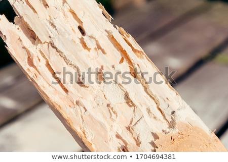 ストックフォト: 木材 · カブトムシ · 明るい · 異なる · 色