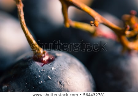 red grape in the red wine on a dark blue background stock photo © elegies